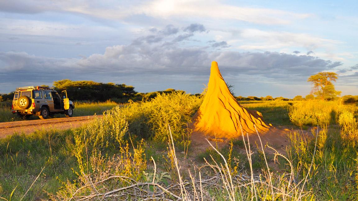 Termiten Hügel auf Namibia Reise