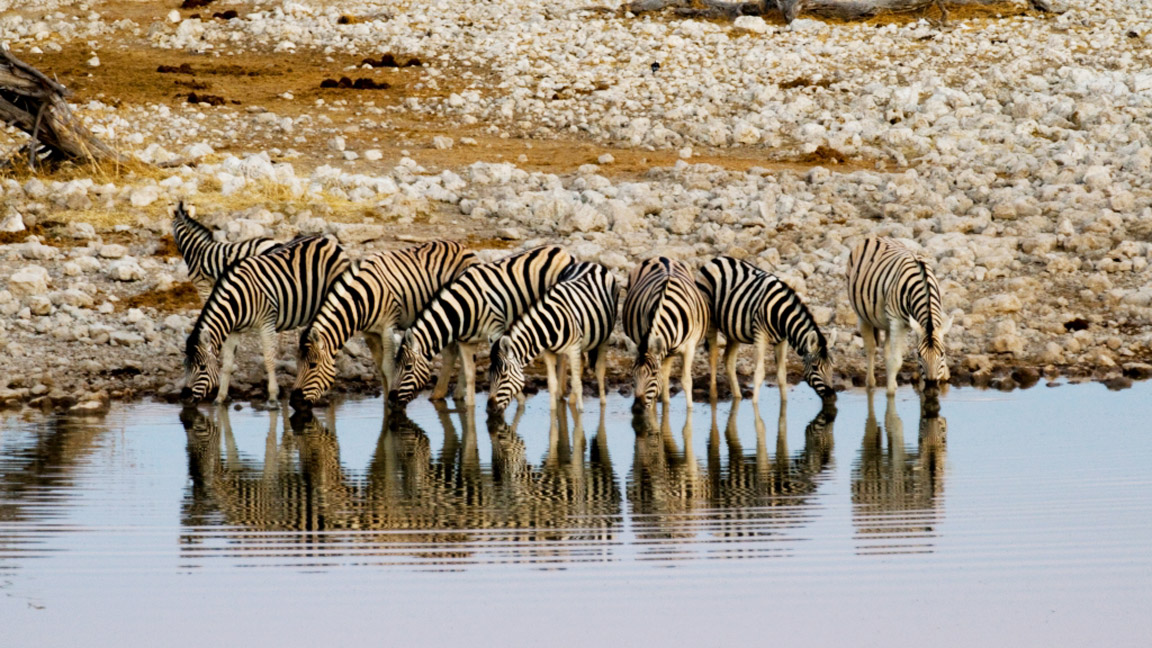 Typische Wasserlochszene Etoscha Namibia