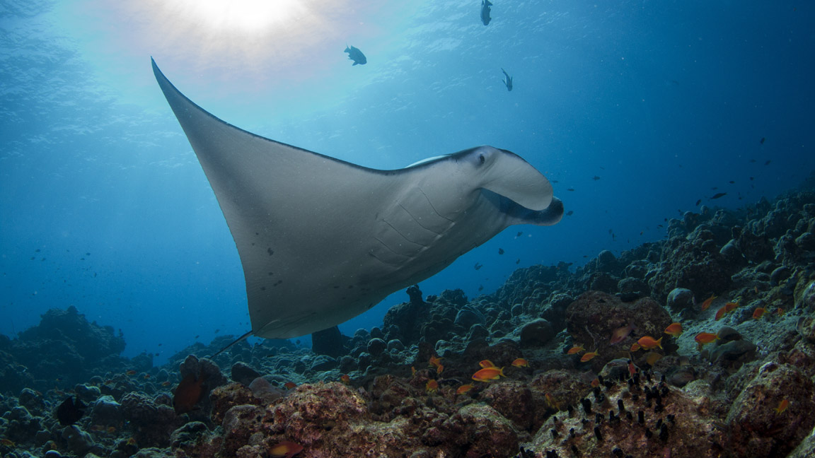 Amilla Fushi Unter Wasser