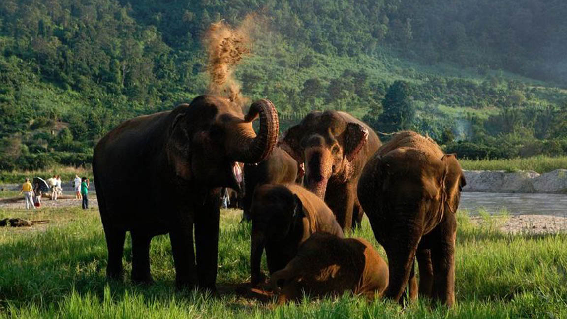 Elefanten in Chiang-Mai
