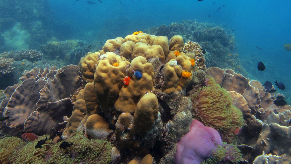 Soneve Kiri - coral by Cat Vinton