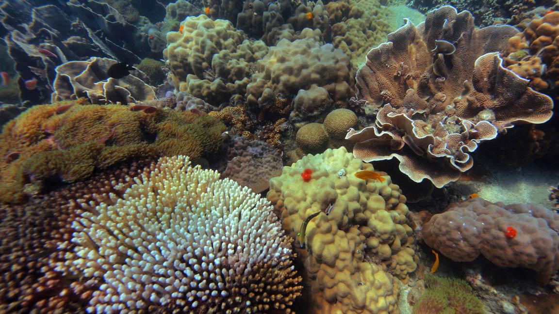 Soneve Kiri -Korallen sichten