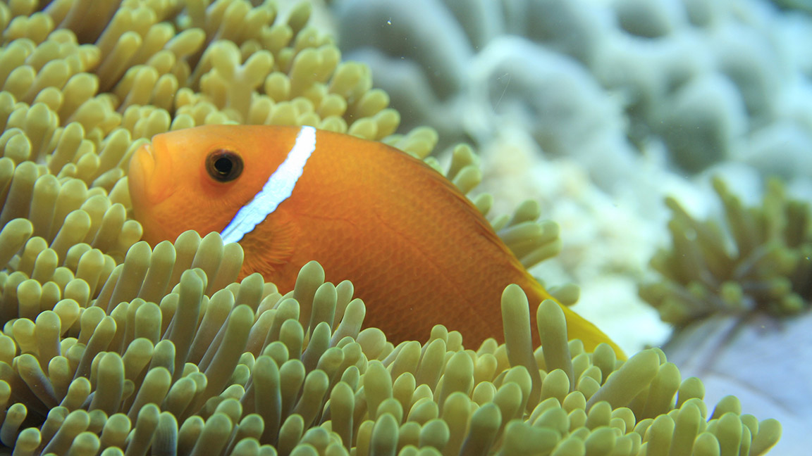 Angsana Ihuru - Unterwasserwelt