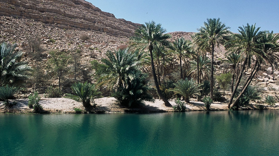 Oase mit Palmen im Oman