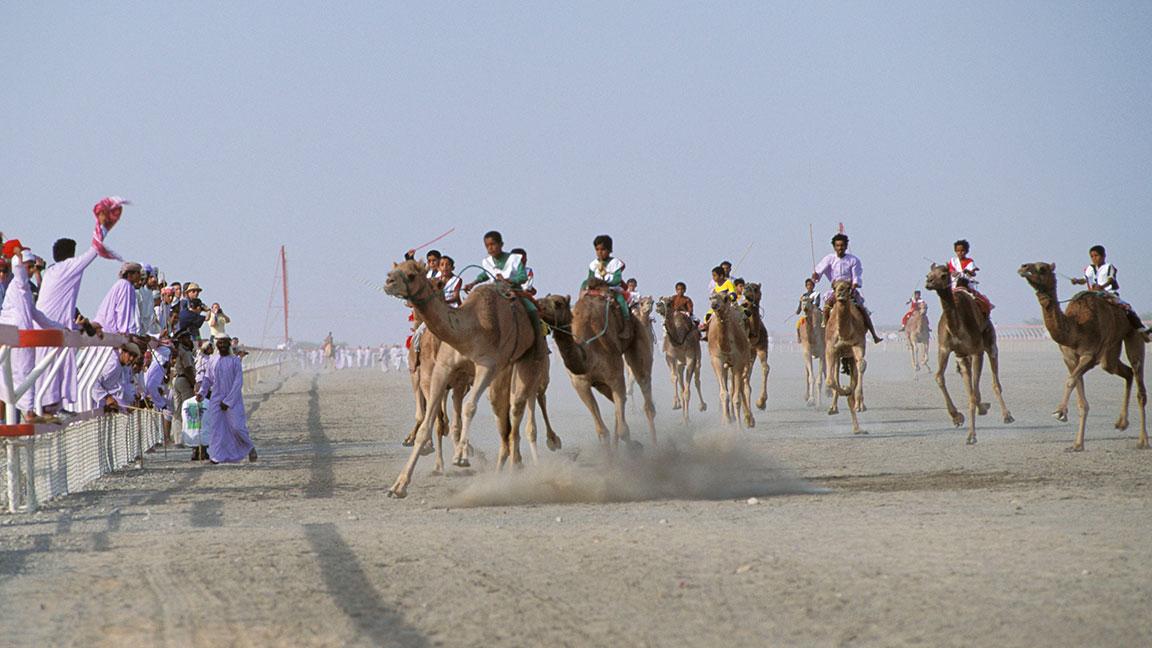 Kamelrennen im Oman
