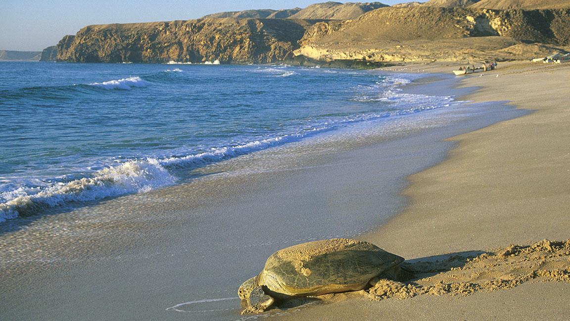 Schildöteam Strand von Oman