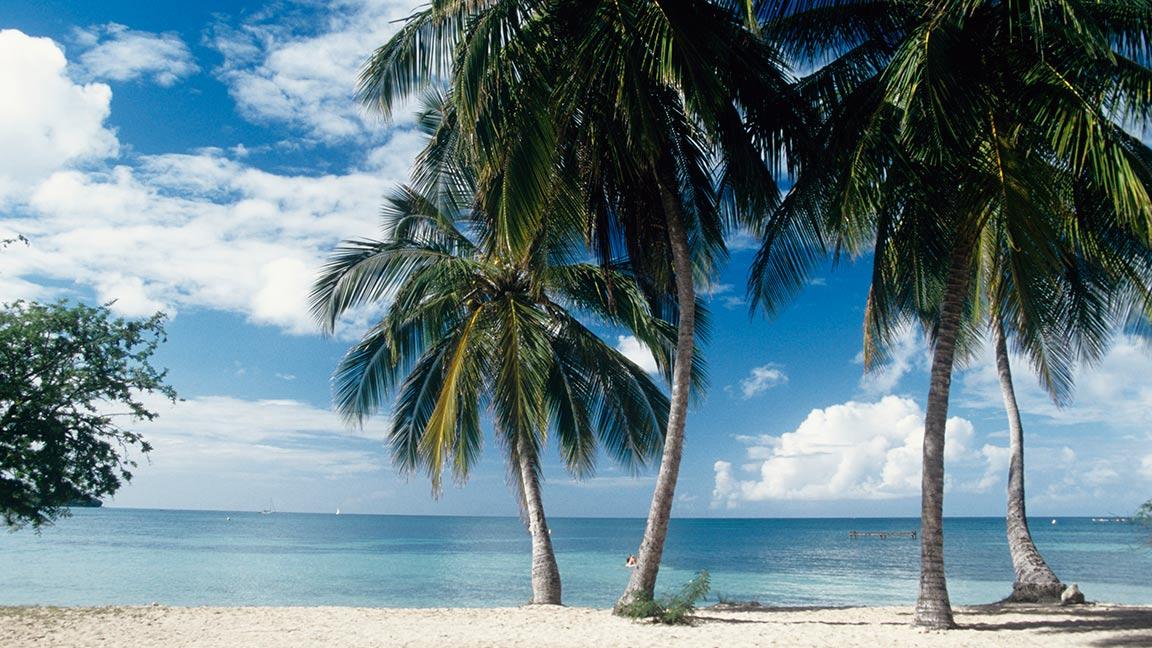 Club Med Martinique – Les Boucaniers Palmen