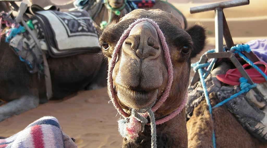 Willkommen-in-Marokko