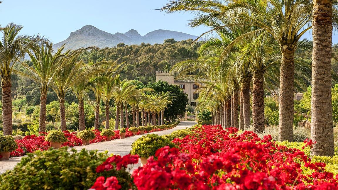 Castell Son Claret - Blumen und Palmen