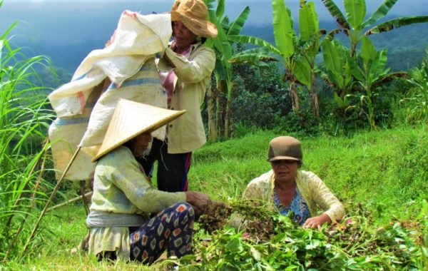 Reis Bauern auf Bali im Feld