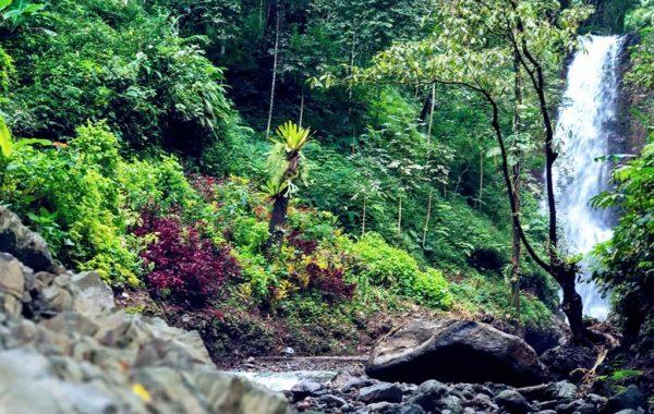 Urwald auf Bali mit Wasserfall