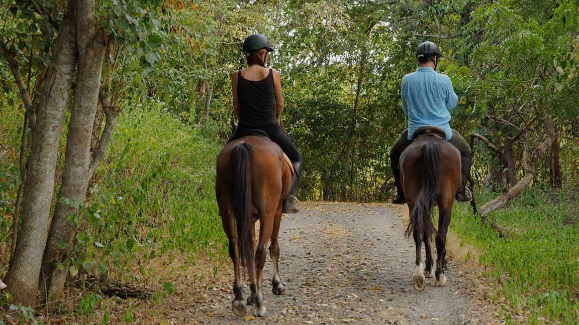 The Menjangan - Pferde