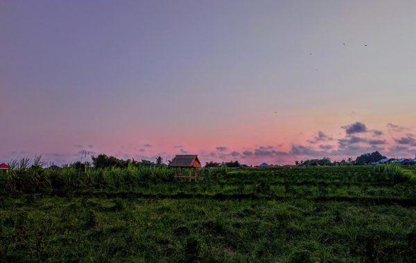 Reise Bali: Felder bei Jimbaran Bali im Sonnenuntergang