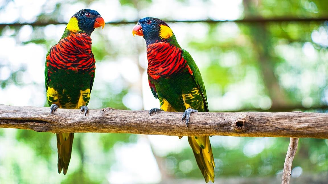 Farbenfrohe Vögel im Kuala Lumpur Bird Park