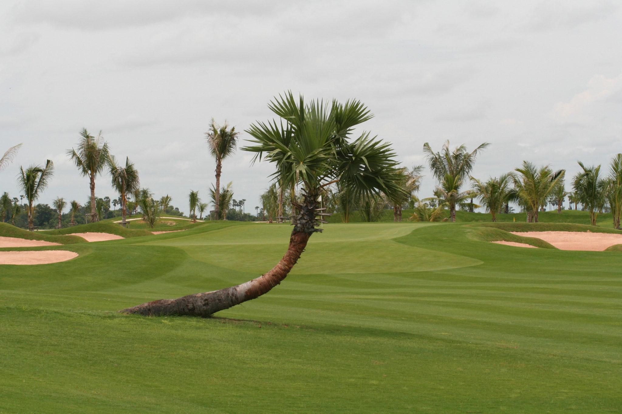 Blick auf grünen Golfkurs mit Palmen in Kambodscha