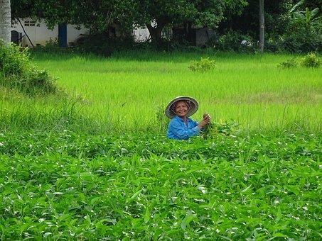 Kambodscha Reis