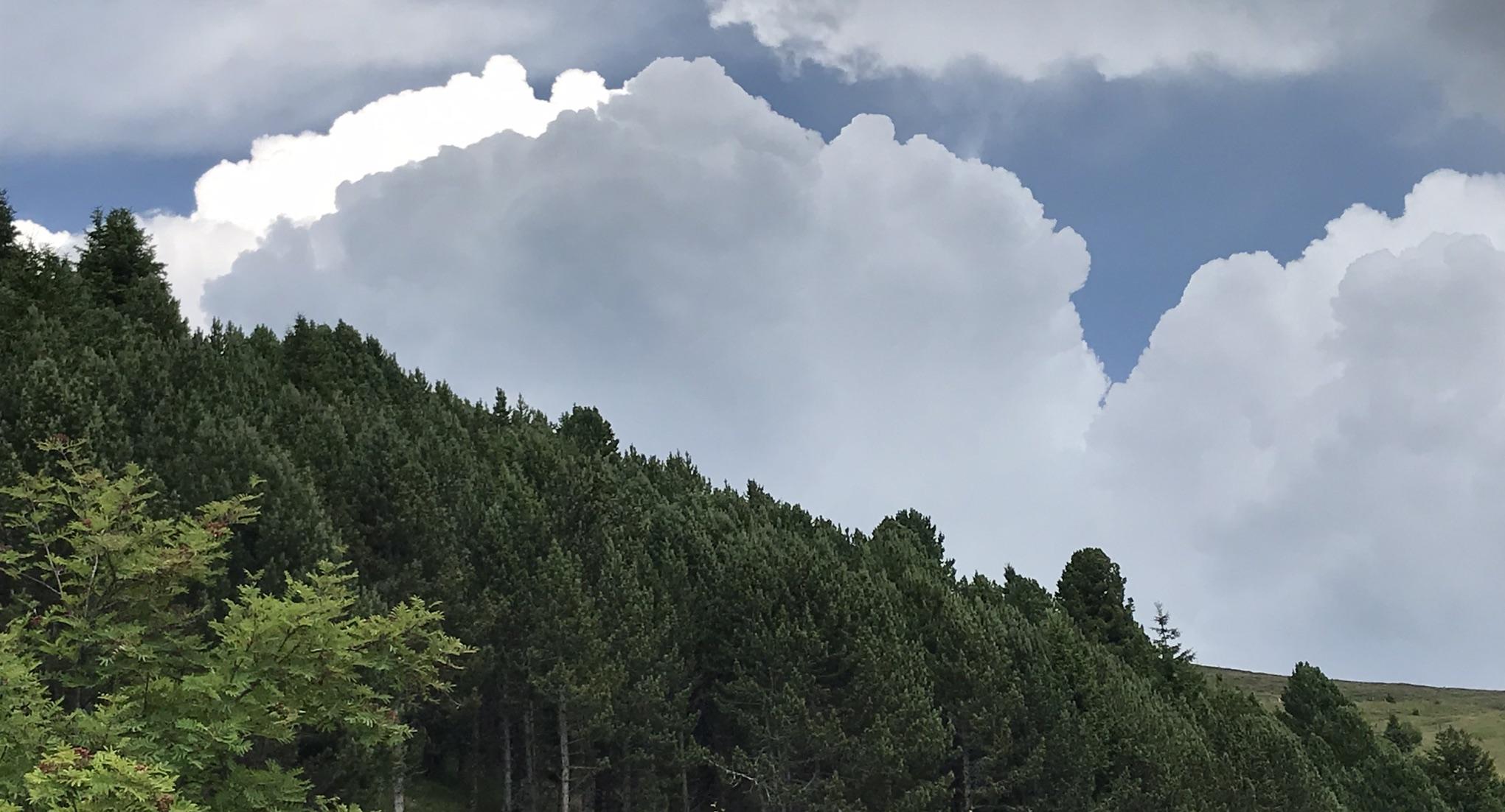 Waldbrand als Folge des Klimawandels
