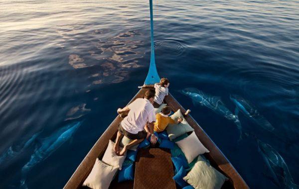 Delfine Bootsfahrt