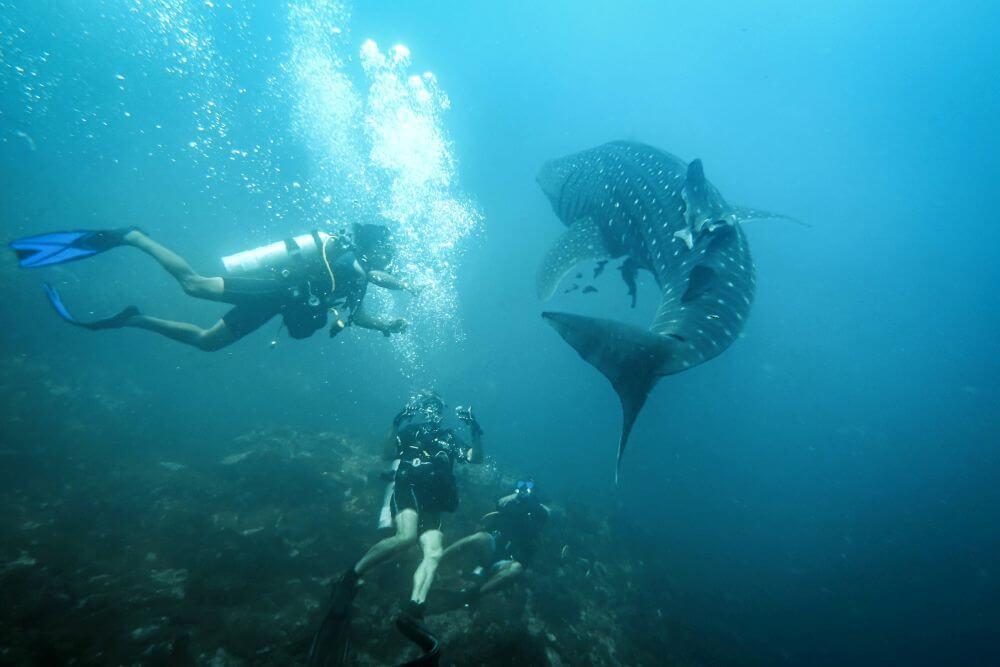 Tauchen mit Wal