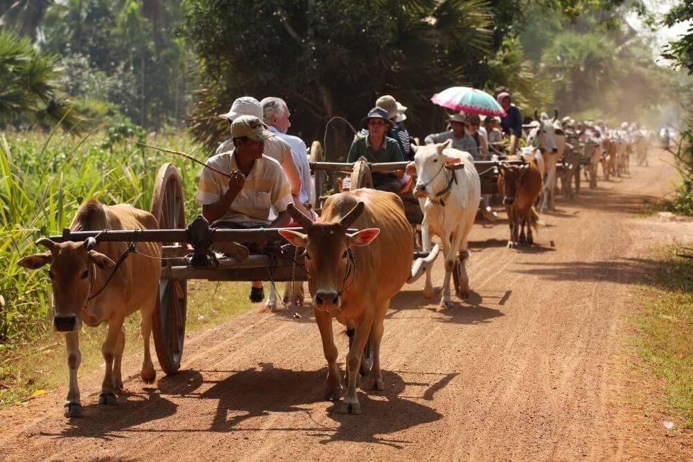 Ochsenkarren während Myanmar Reise