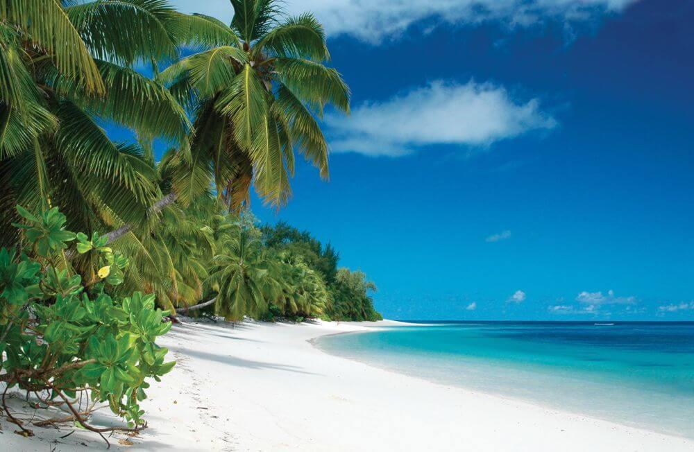 einsamer Palmenstrand