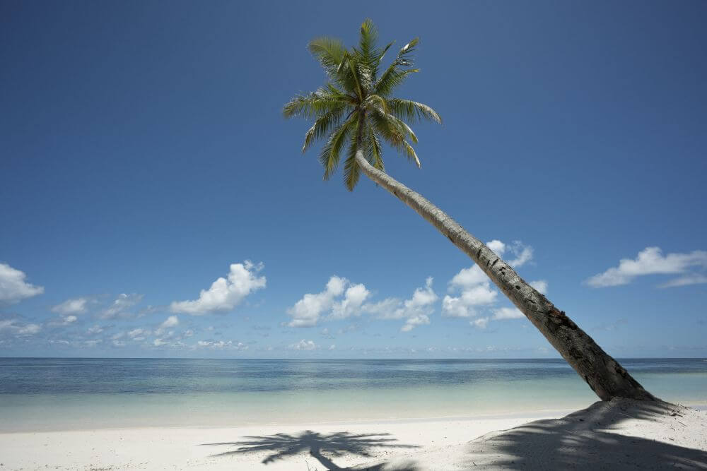 Palme am leeren Strand