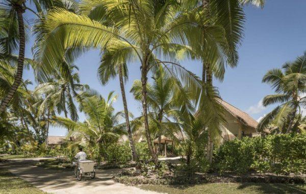 Weg mit vielen Palmen