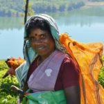HI - Projektreise Sri Lanka - Teepflückerin im Hochland