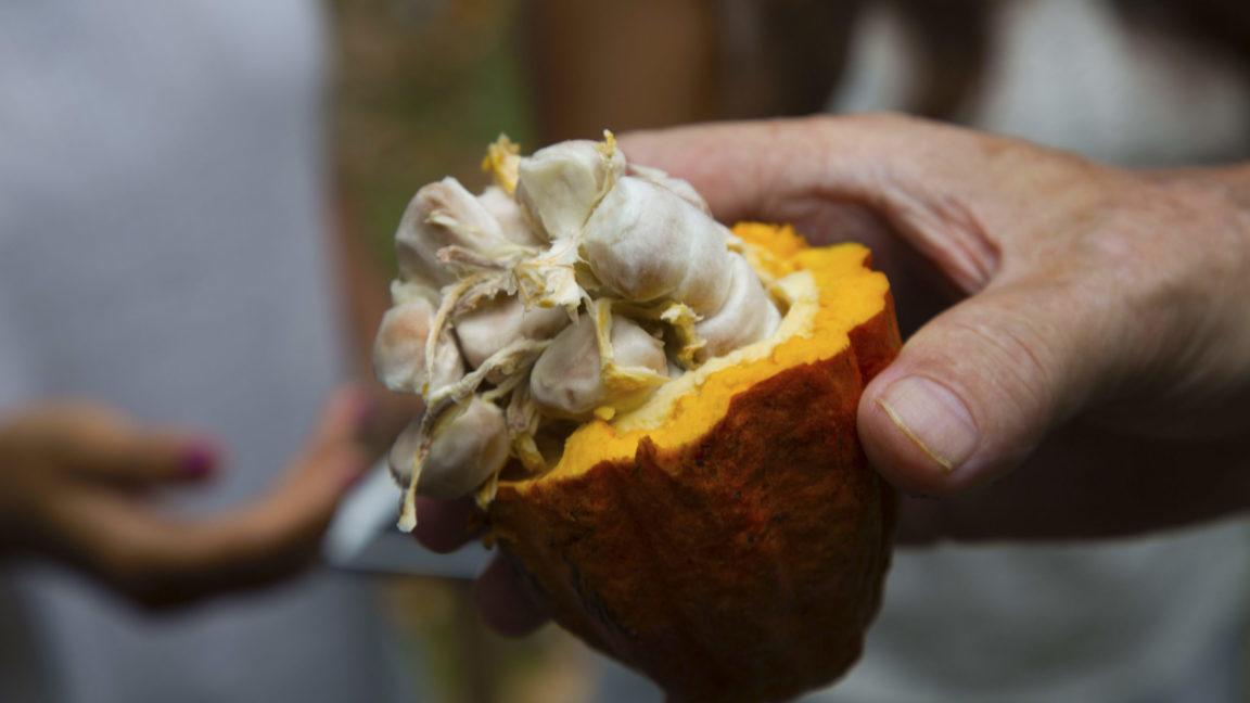 Kakao auf Sri Lanka