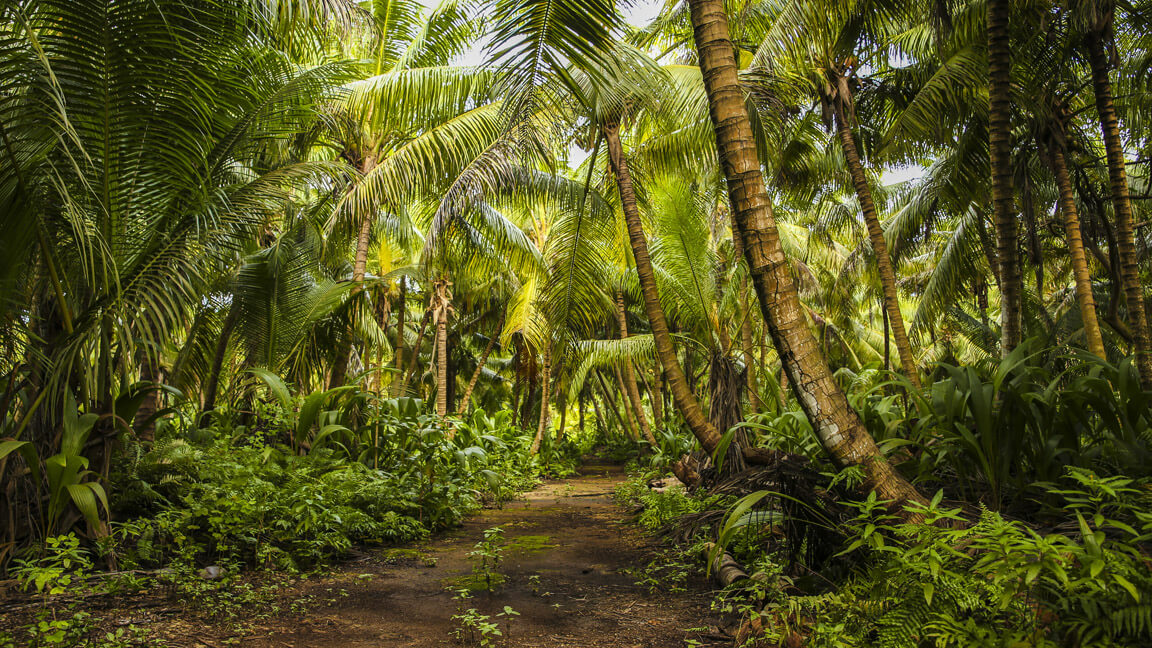 Denis Island Forest
