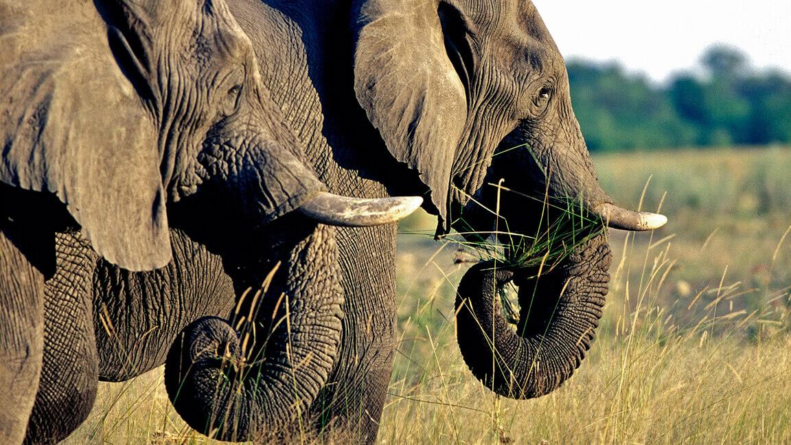 Botswana Safari Okavango Delta
