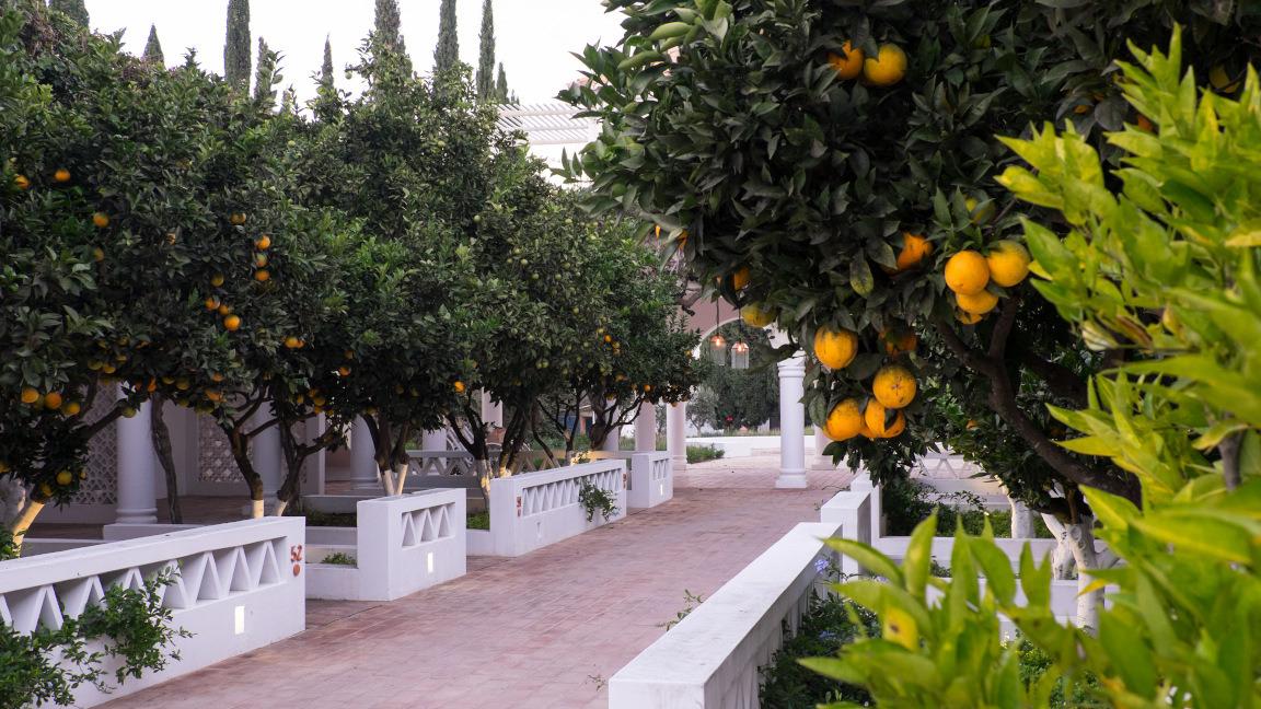 Garten des Vila Monte Farmhouse, Algarve, Portugal