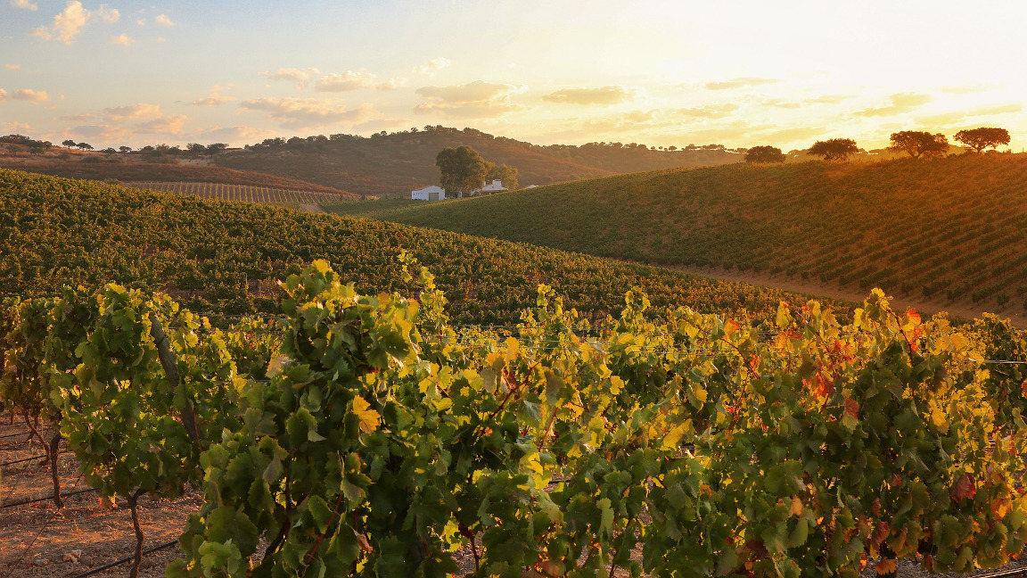 Kulturreise Portugal: Weinanbaugebiet Alentejo Portugal